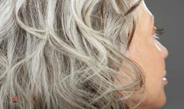 طريقة صبغ الشعر الأبيض منزلي ا أسباب الشعر الأبيض مع أفضل طرق الصبغ القهوة زيت جوز Shampoo For Gray Hair Beauty Tips For Hair Silver Hair Highlights