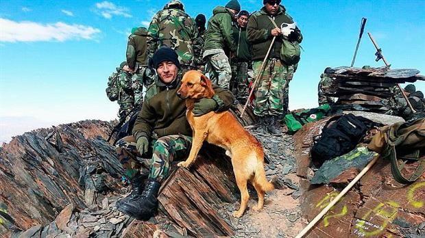 #Salta #Argentina de #Cabo a #Sargento: un #Perro del #Ejército fue #Ascendido  Cabo es un Perro de montaña.#Foto #EjércitoArgentino