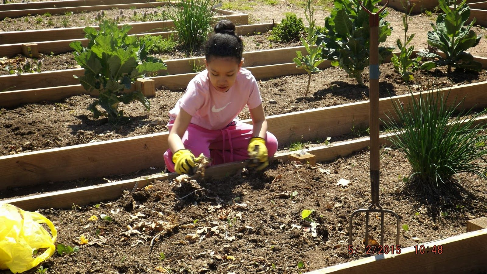 Grow Your Own: Suburban Gardening: Avalon clears a bed of dead ...
