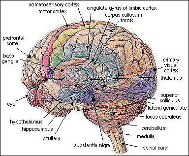 Tbi abi recovery media item detailed brain 1 dailystrength just brain ccuart Choice Image