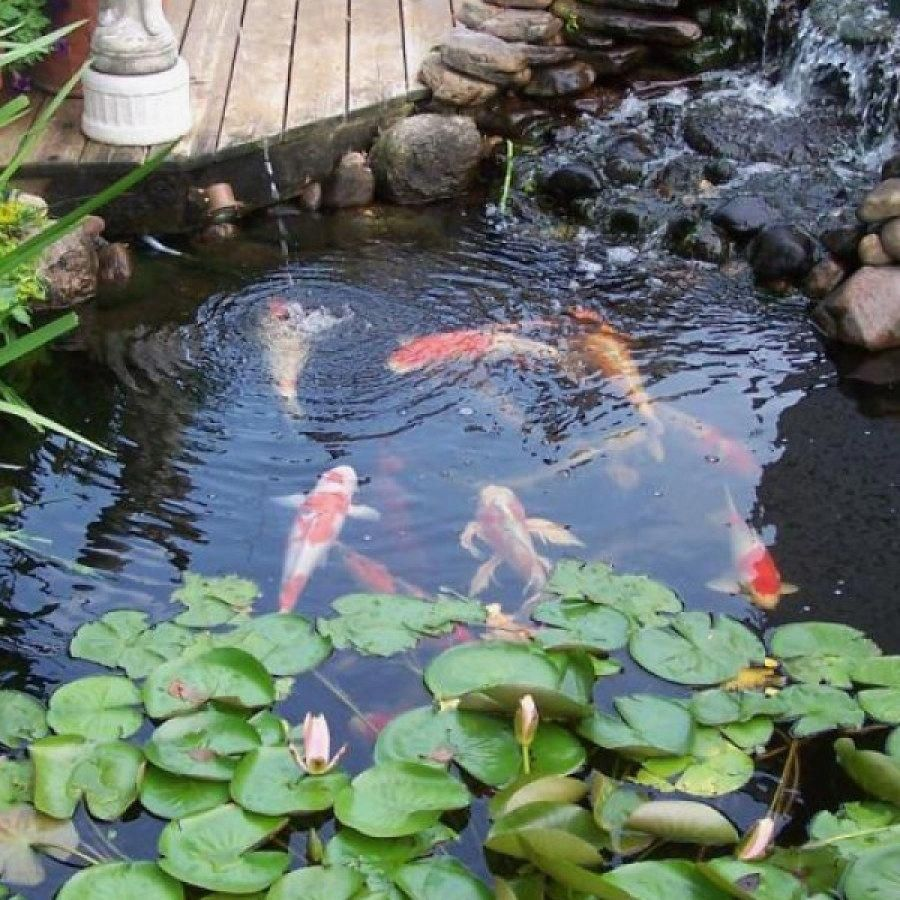Tips for Building Ponds in Your Backyard Koi pond design