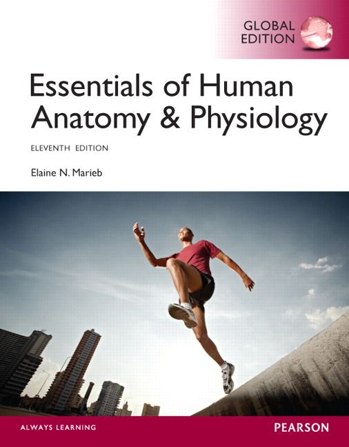 dr.knowledge: essentials of human anatomy & physiology - Downloa ...