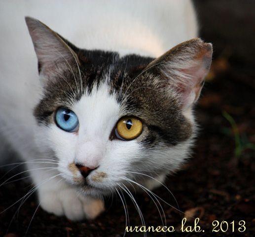 #neko #cat (via acco_t)