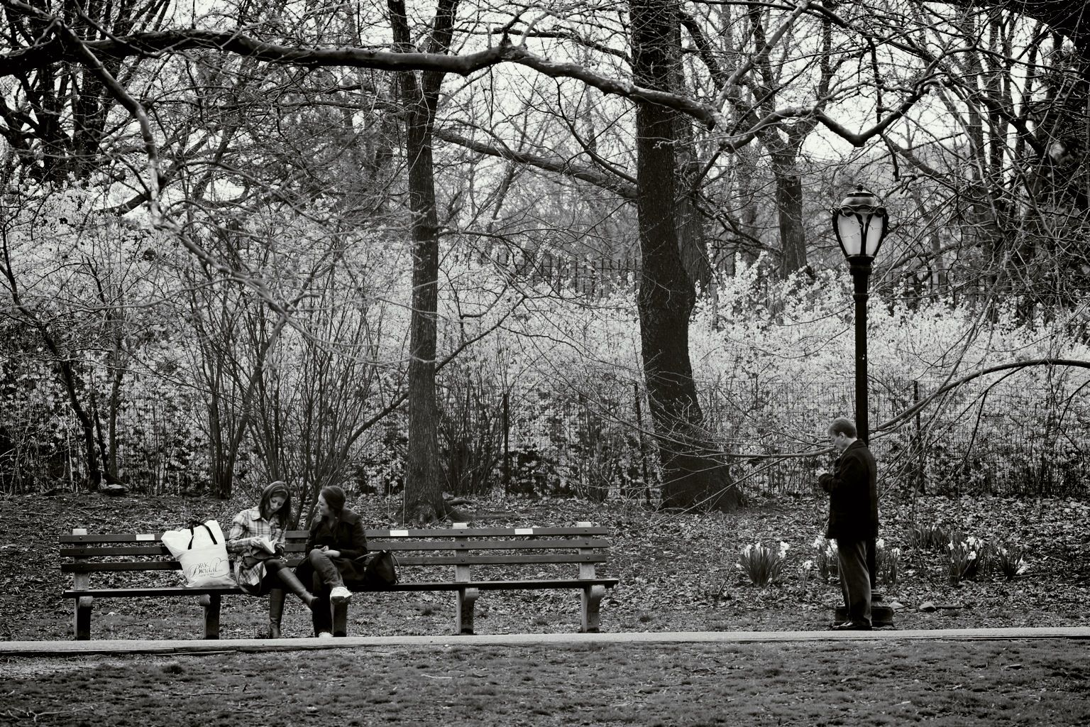 NYC, central park, benches, sitting, lamppost, fall, black and white, © will rodenbough