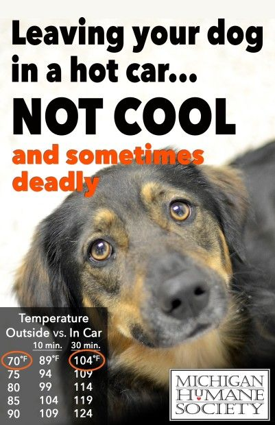 Protect Your Pets From The Hot Weather With These Tips From The Michigan Humane Society Pet Holiday Humane Society Pets