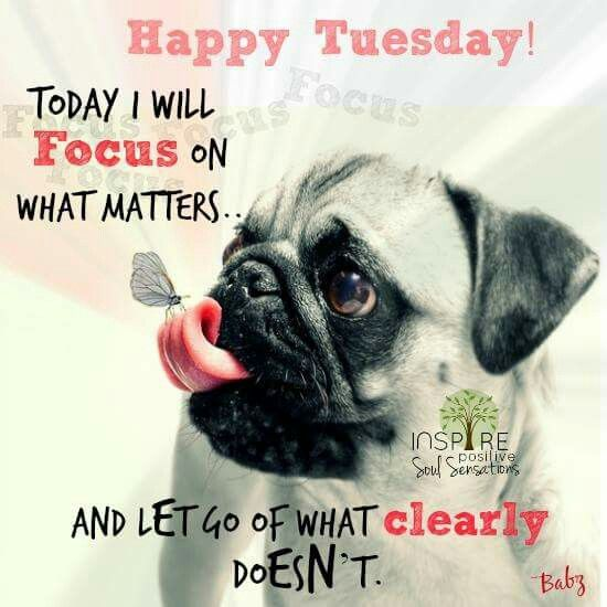 Quotes Happy Morning Tuesday Funny