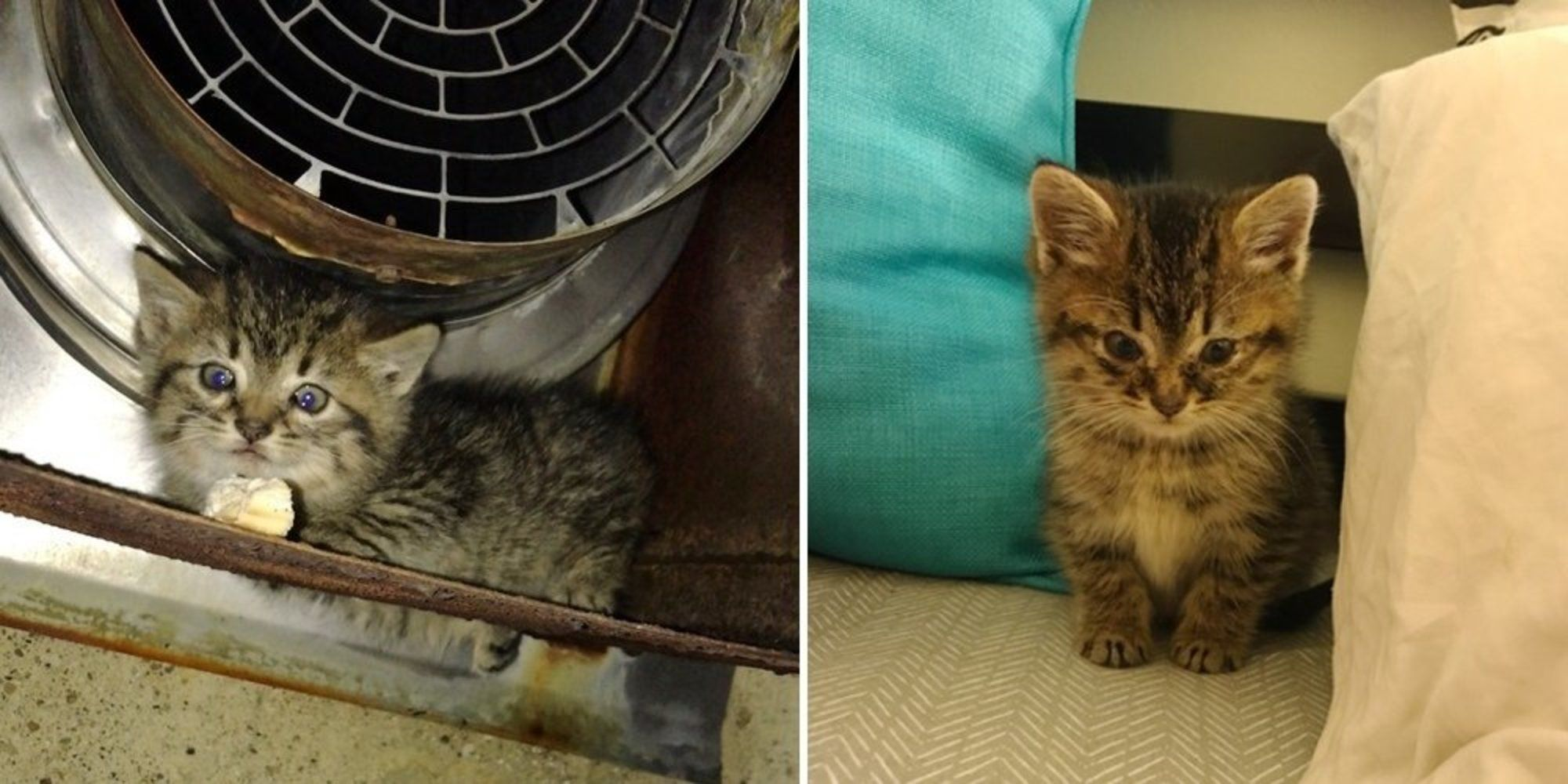 A Young Woman Found A Tabby Kitten Outside Of Her Workplace One Night Meowing For Help After An Hour Of Trying To Coax The Kitten Out She Kitten Care Kittens Cats