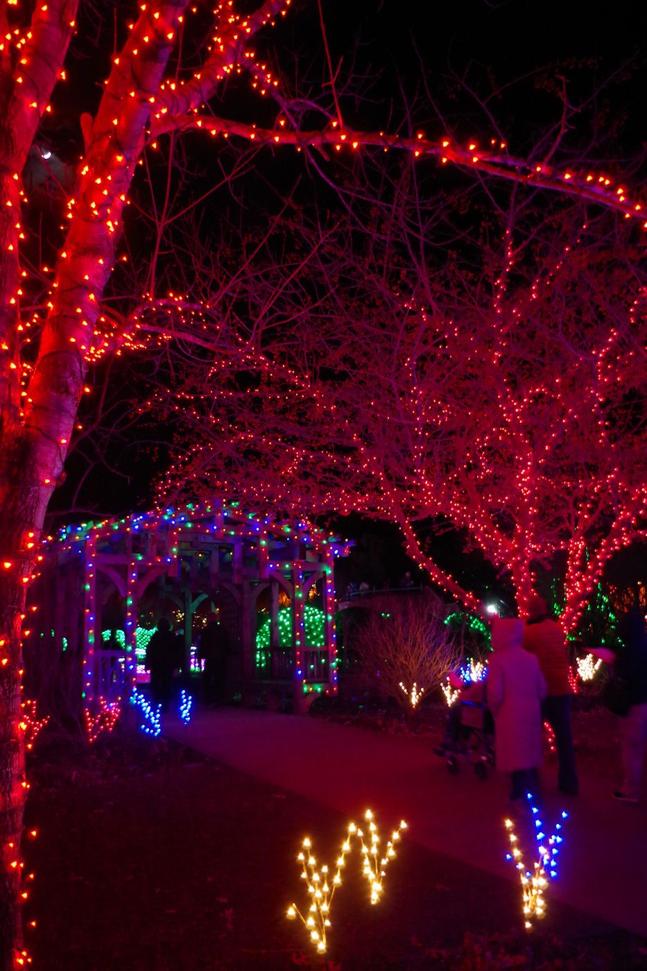 Winter Lights at the NC Arboretum in Asheville Winter