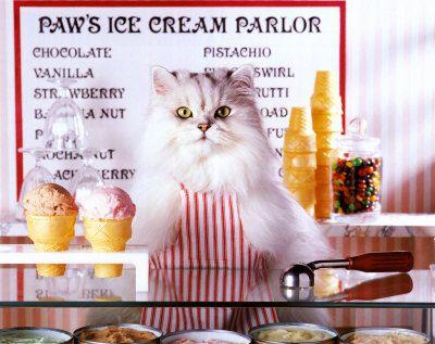 Pin By Dipuggo Publishing On Meoooooow Cat Ice Cream Eating Ice Cream Homemade Ice Cream Recipes