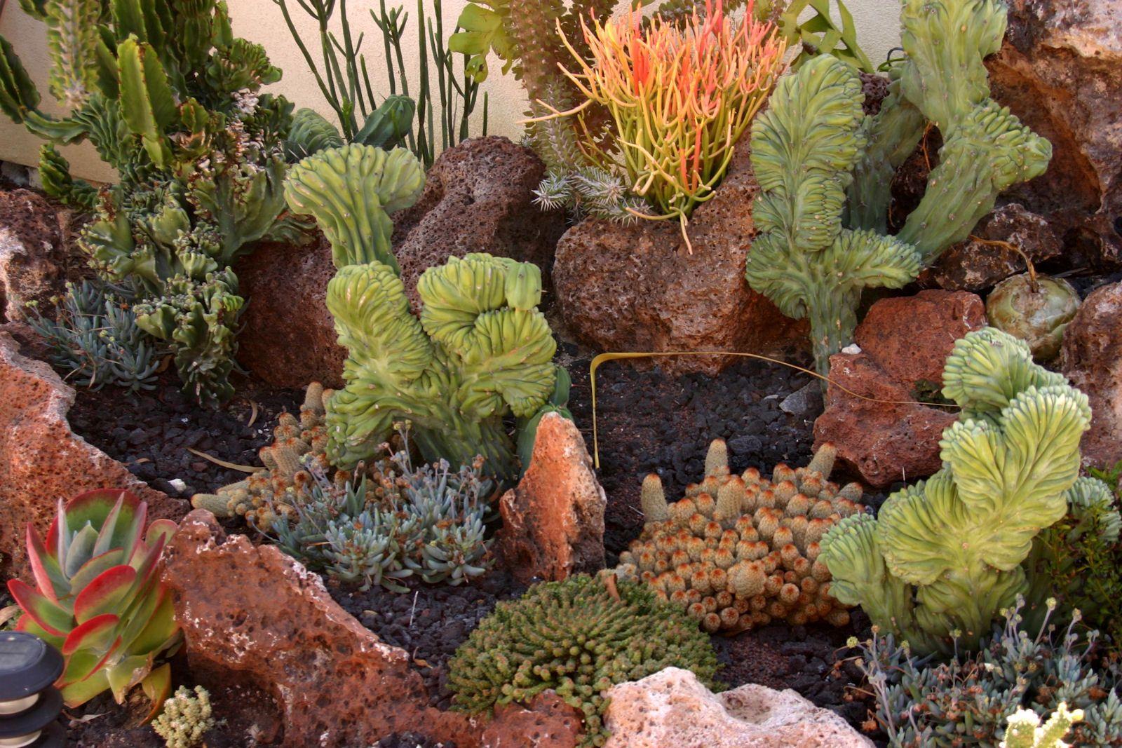 Love this underwater succulent garden at the San Diego Botanic ...