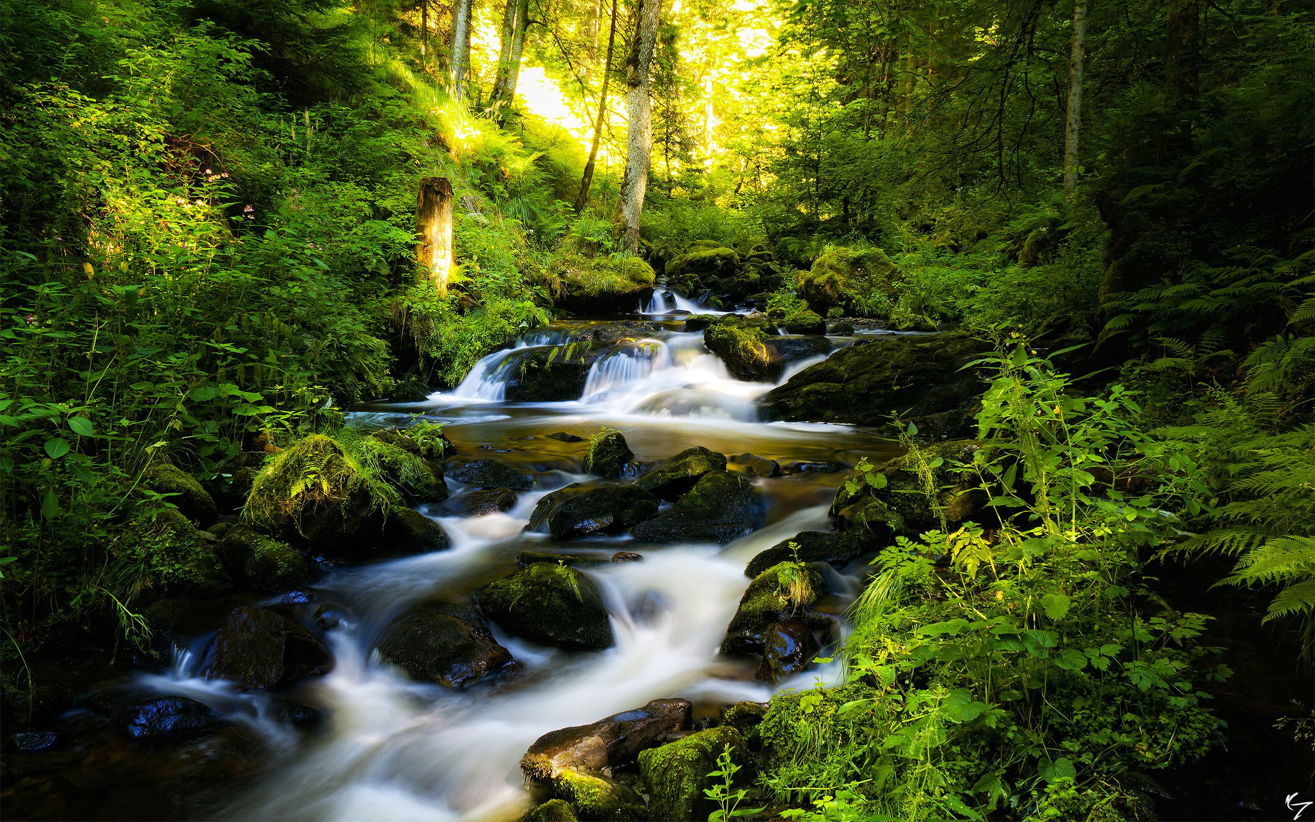 black_forest_in_germany-wide.jpg (2560×1600)