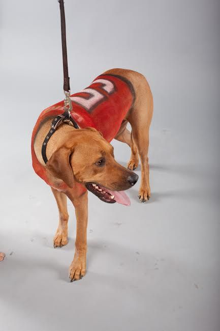 PetPaint your dog for Super Bowl Sunday! #petpaint #superbowlpartyideas #dogs