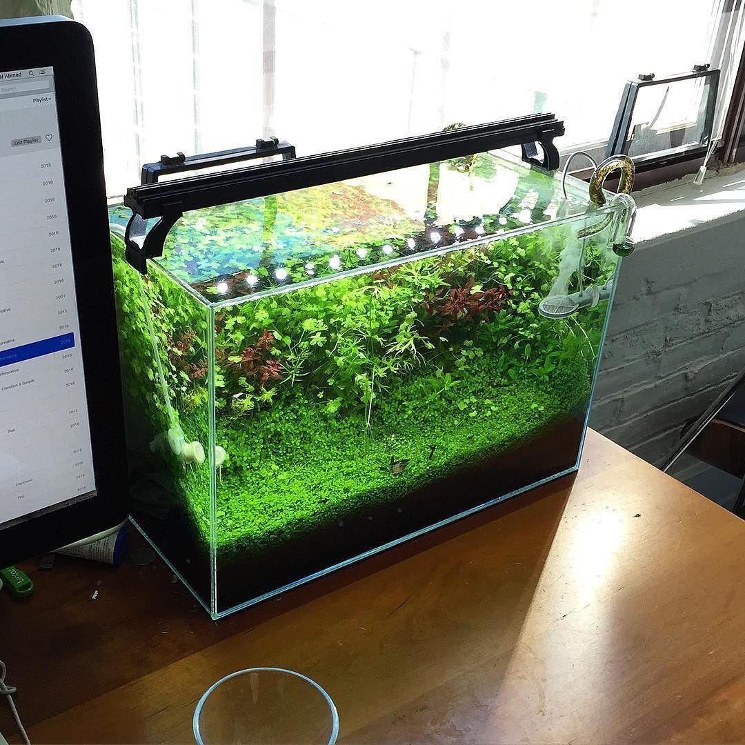 34 liters #neocaridina #shrimptank #aquarium #Aquascaping #natureaquarium #plantedtank #plantedaquarium #ebi #aquarium by shrimpery