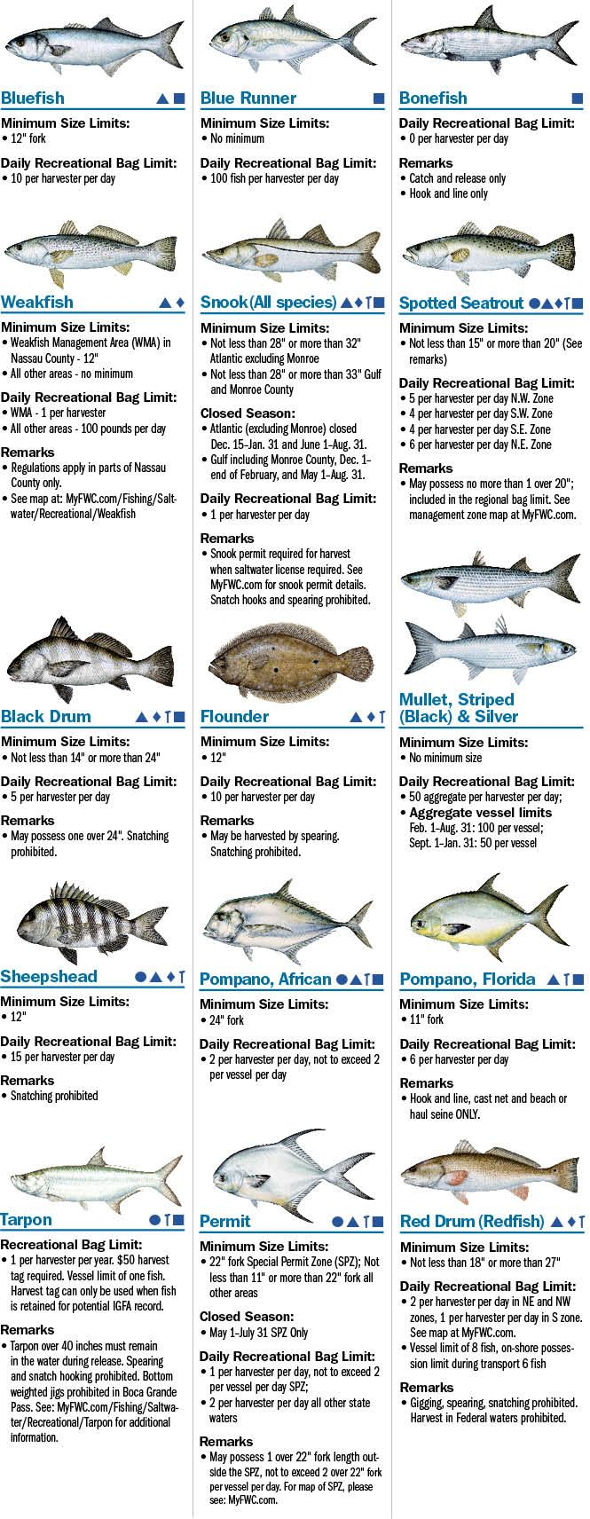 Coastal species florida saltwater fishing regulations for Fishing license florida