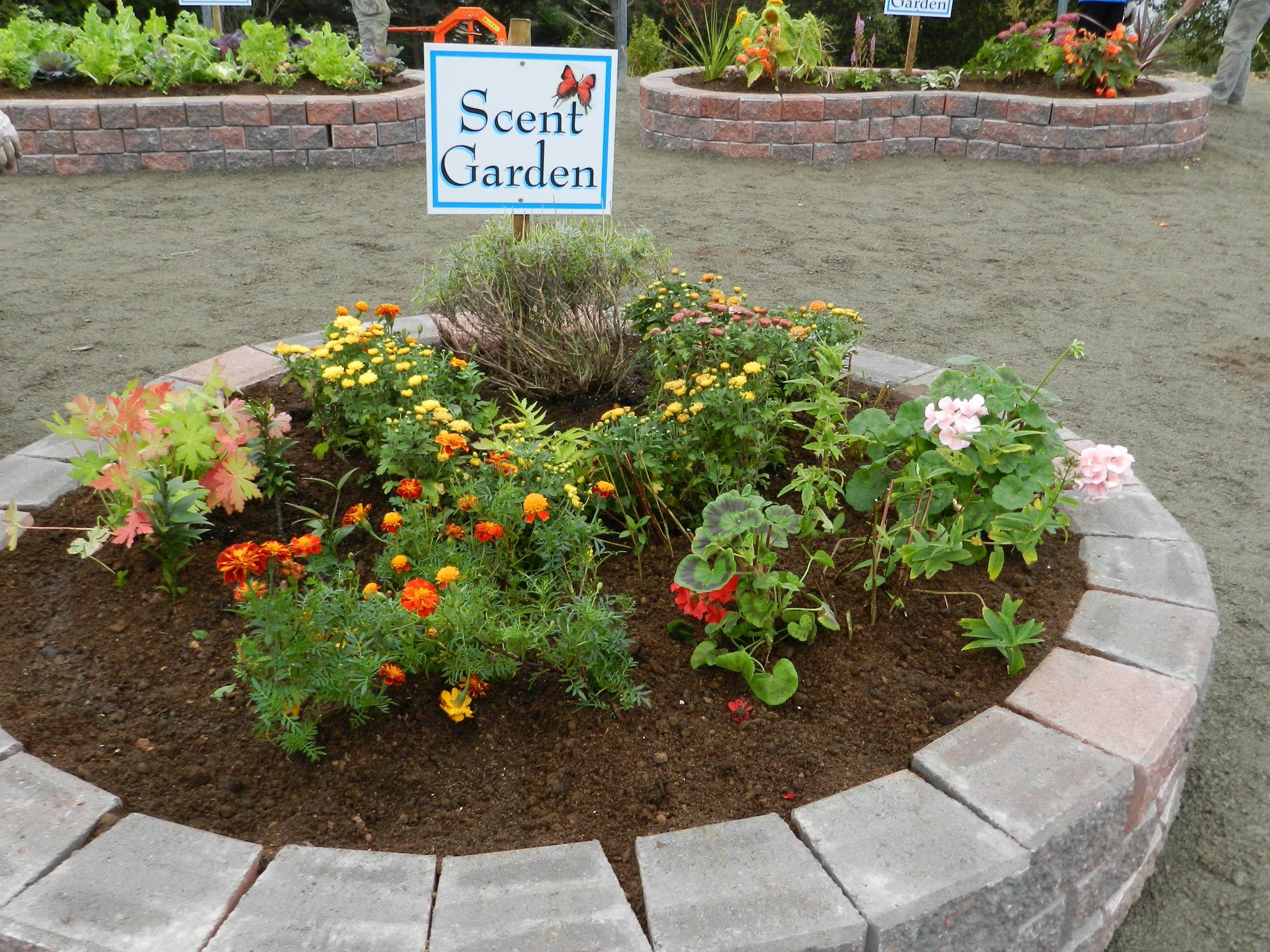 scent garden sensory garden ideas pinterest