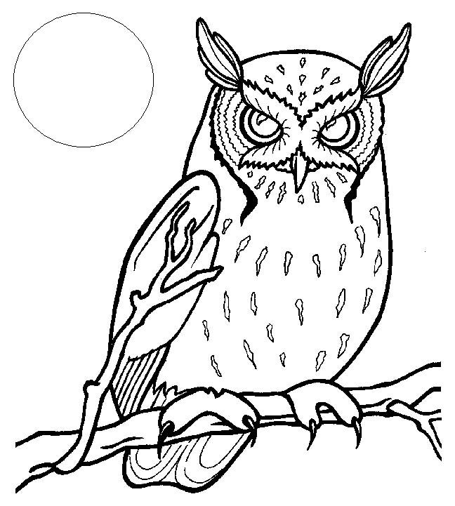 Coloring Books pictures of owls to color | Chesapeake And Ohio ...