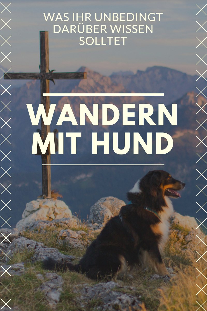5a085959cbe42c Was ihr beim Wandern mit Hund beachten müsst!