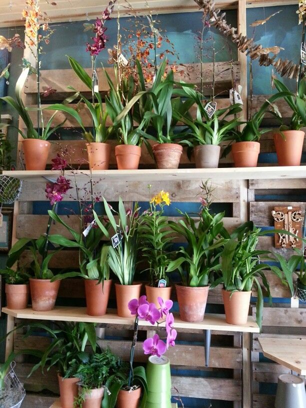 Wall of orchids..glorious