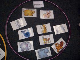 Mrs. Wood's Kindergarten Class: Oviparous and Mammal sort
