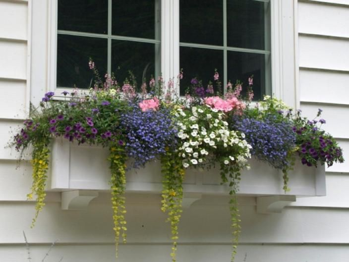 Flower Window Baskets : Window boxes for cottages quot choose a