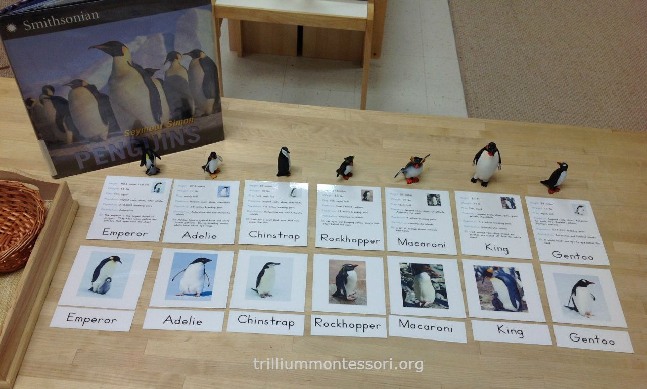 Antarctica Learning About Penguins