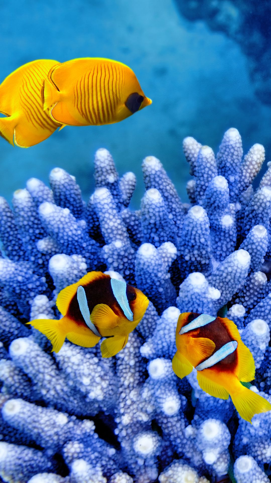Iphone Clownfish Wallpaper 4k Fish Wallpaper Iphone Fish Wallpaper Fish