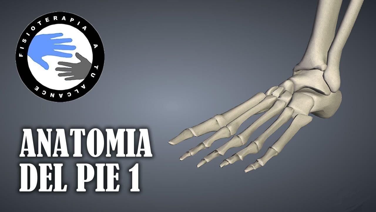 Anatomia del pie, huesos, funciones y fracturas mas frecuentes ...