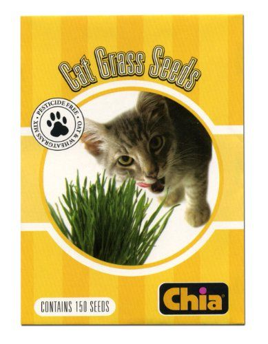Chia Cat Grass Seeds 6 Count Chia Https Www Amazon Com Dp
