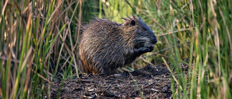 Usda wildlife services wildlife ecology zoology ecology