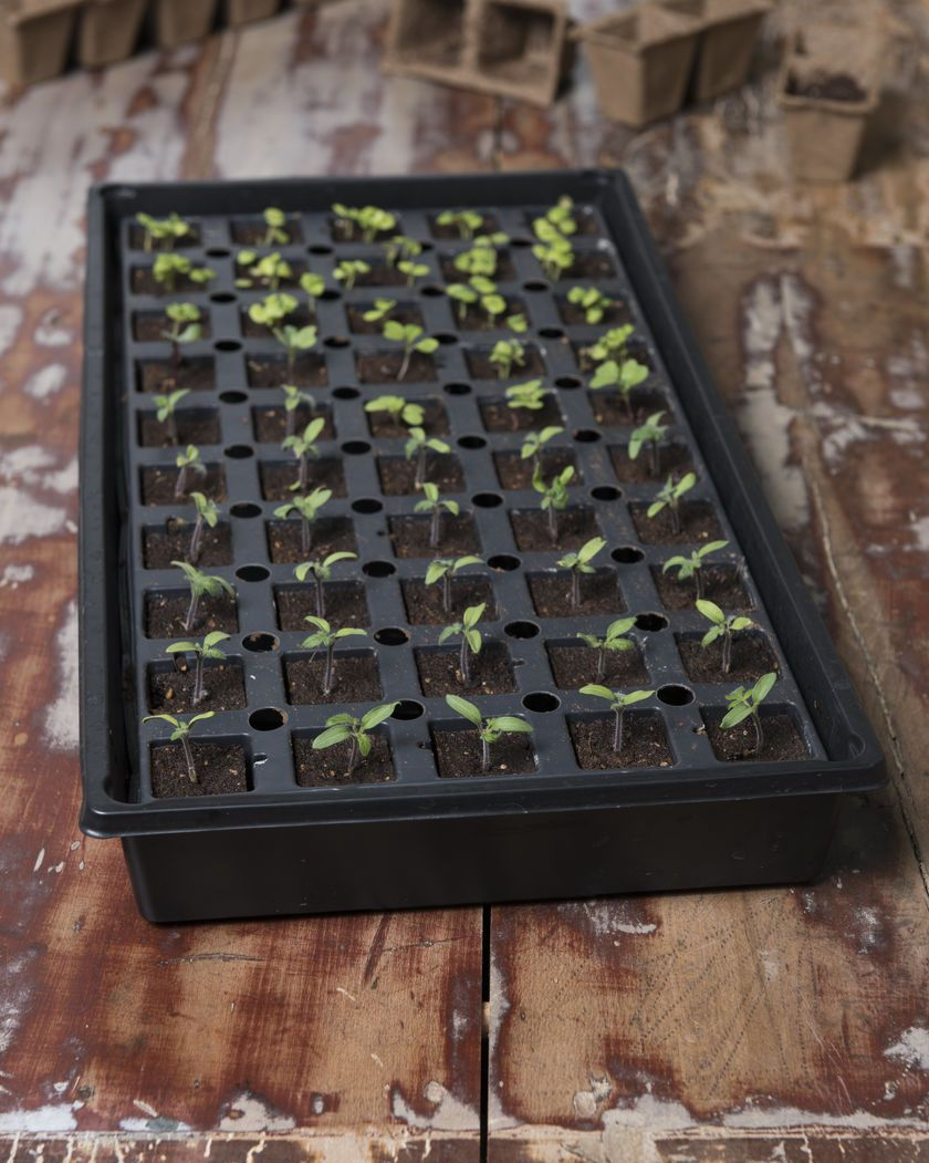 Smart Grow Seed Starter Kit Seed Starting Trays With 50 Cells