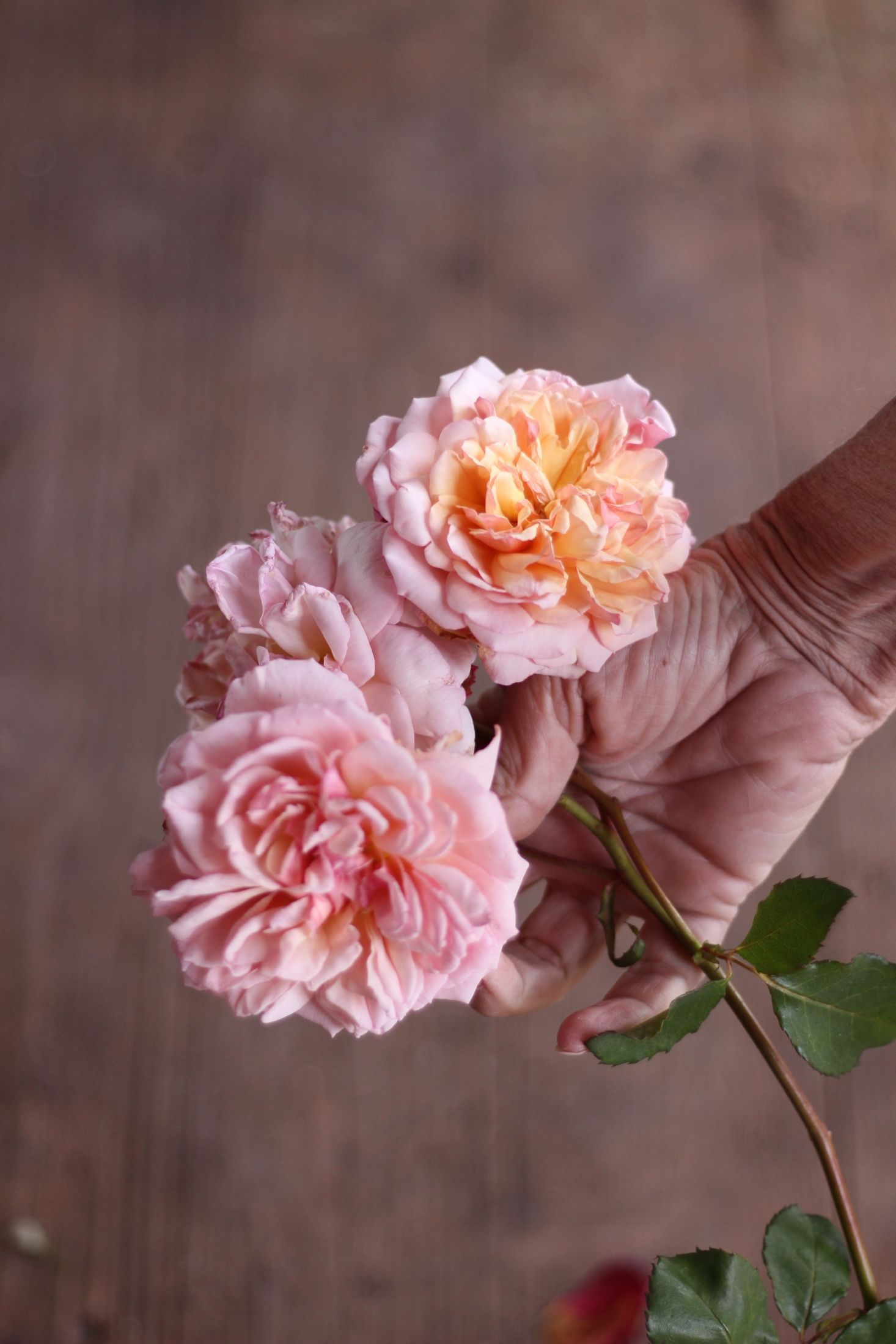 Why Rose Gardening Is So Addictive Rose Garden Amazing Gardens Growing Roses