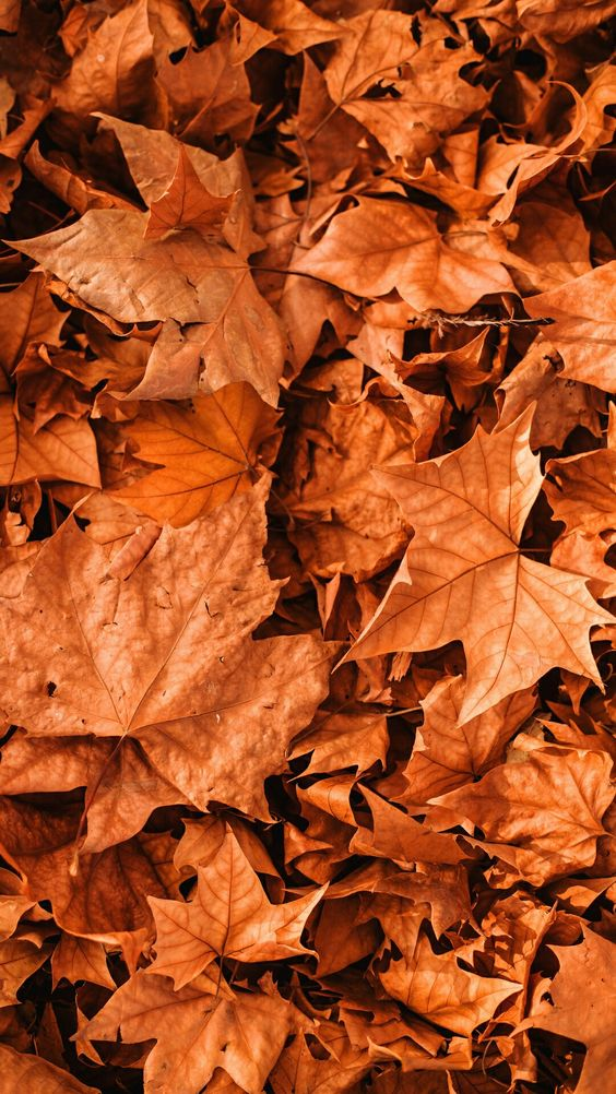40+iPhone Wallpapers That Will Make You Fall In Love With Autumn - Azuretry Blog #falliphonewallpaper 40+iPhone Wallpapers That Will Make You Fall In Love With Autumn - Azuretry Blog #fallwallpaperiphone