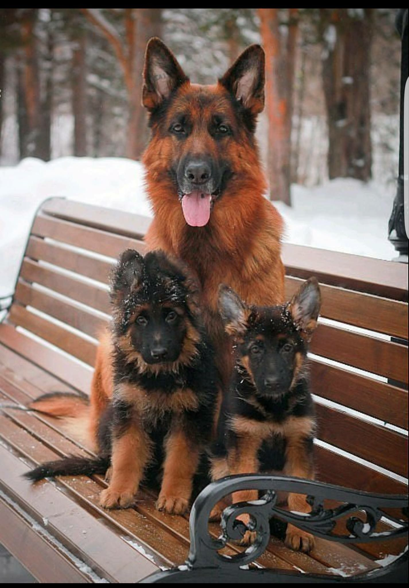 Pin By Victoria Bubis On Dogs In Our Lives German Shepherd Dogs