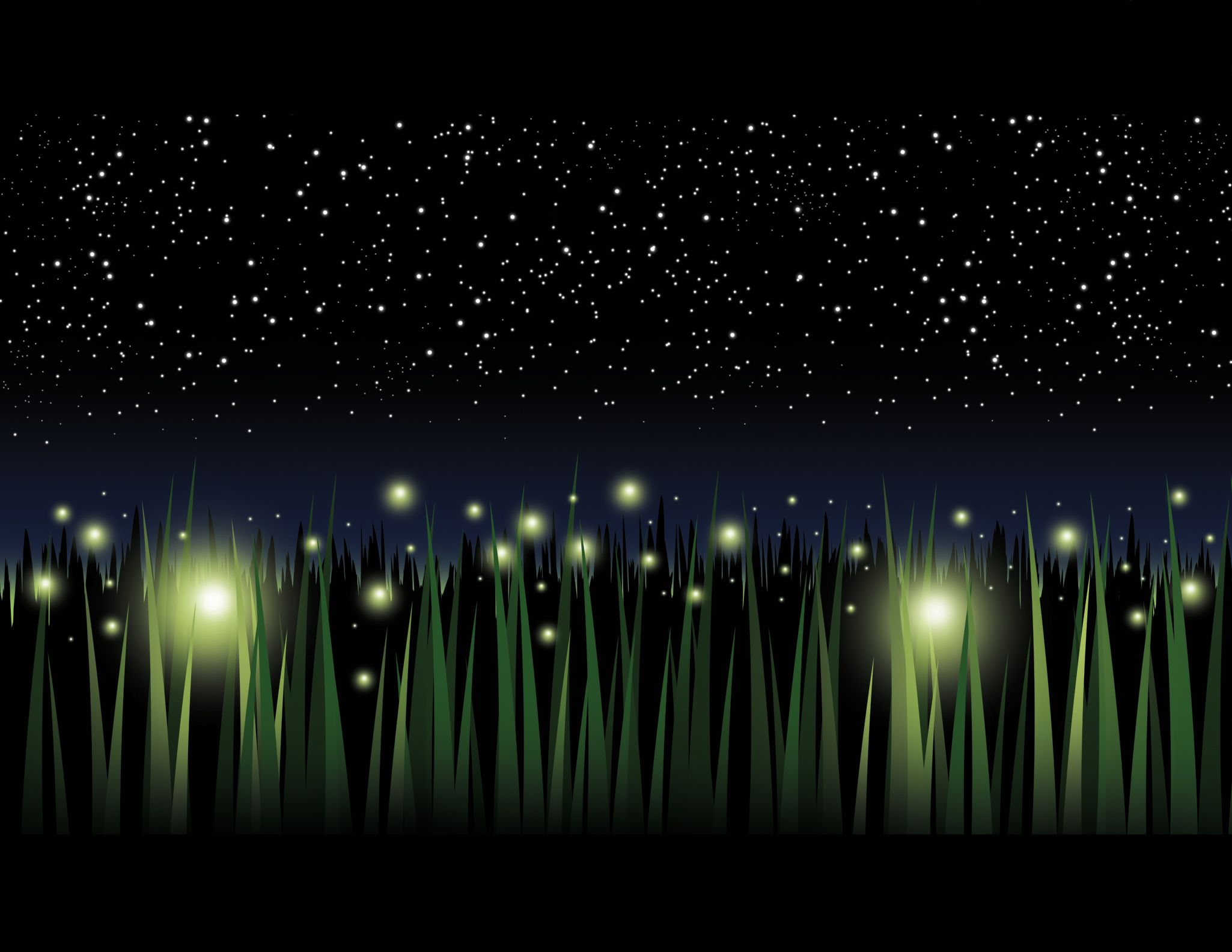 Lightning Bugs With Images Lightning Bugs And Insects Pictures