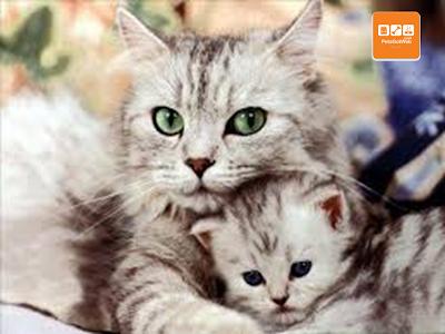 بيتس جوت ويب لشراء وبيع الحيوانات الأليفة تقدم لكم كيفية الأهتمام بالقطط Petsgotweb Cute Cats And Kittens Cute Cat Wallpaper Cute Kitten Gif