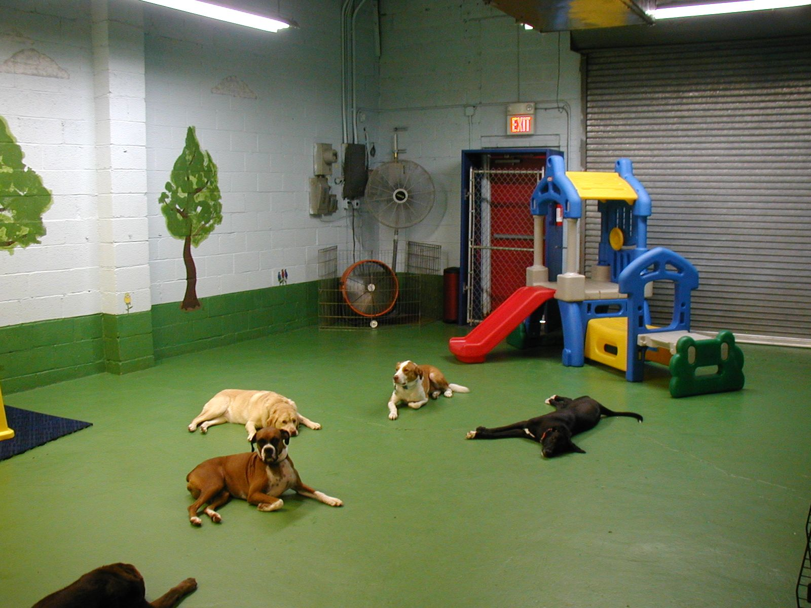 Spring Has Sprung In My Basement Dog Rooms Dog Play Room Dog Daycare