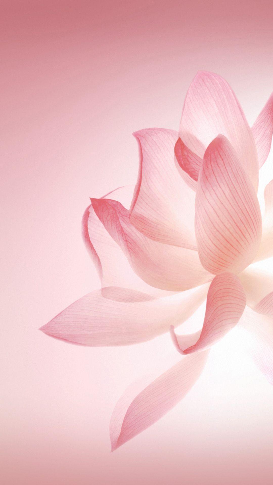 adidas fiori di loto