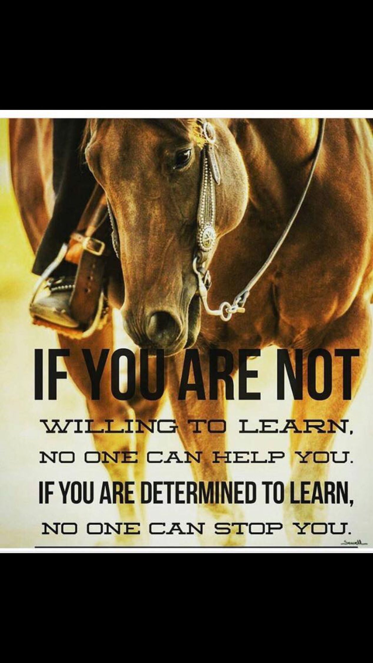 Love This quote | Inspirational horse quotes, Cowboy quotes, Rodeo quotes