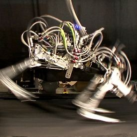 DARPA's Cheetah Bot Breaks Human, Robot Speed Records