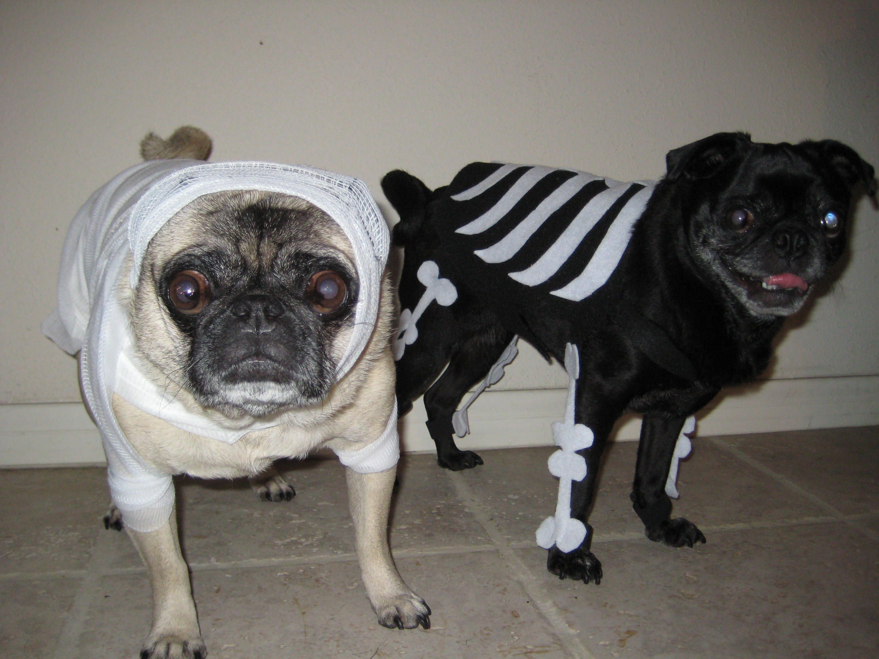 Scary Pugs Mummy & Skeleton Halloween 2009 Halloween