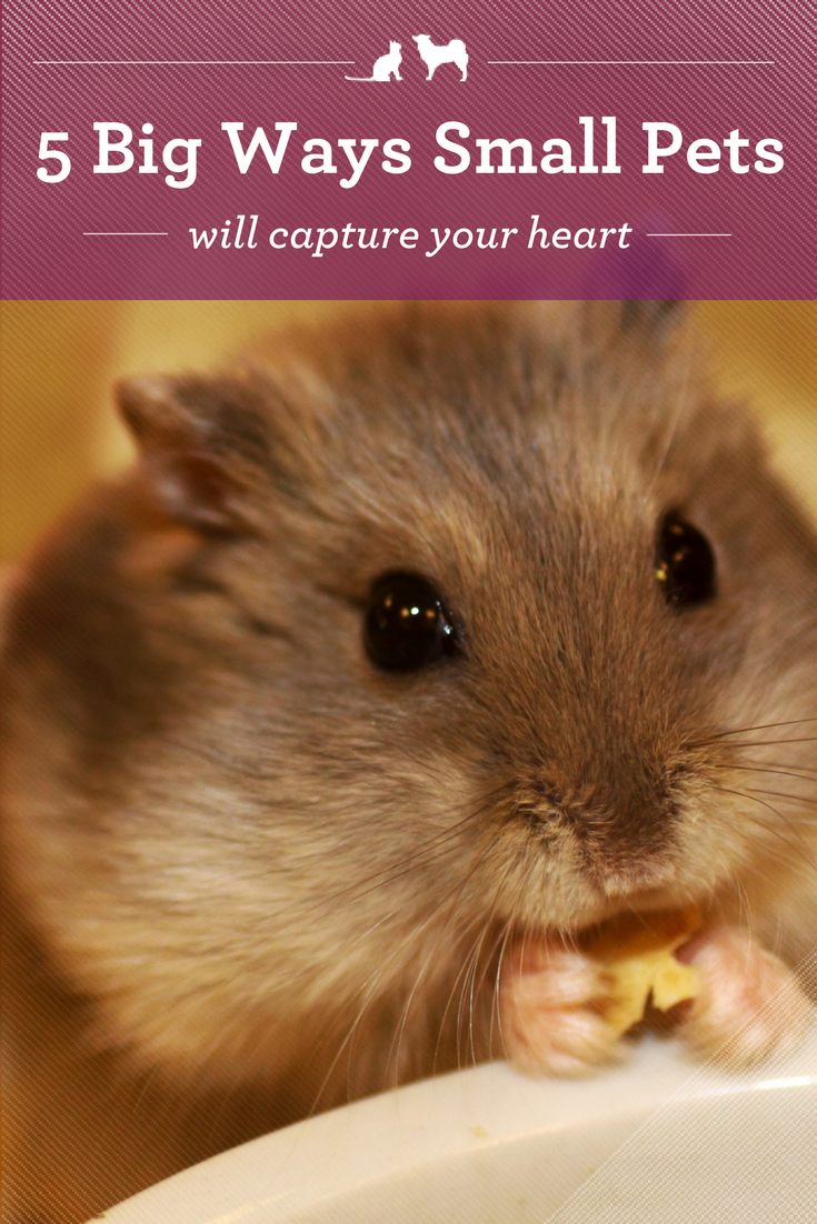 5 Big Ways Small Pets Will Capture Your Heart Small Pets Pet