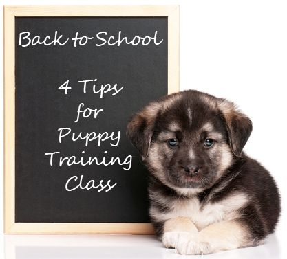4 Tips For Puppy School Success Puppy Training Puppy School