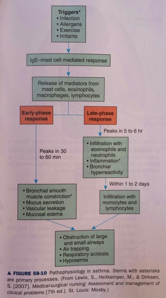 Pathophysiology of asthma. *primary processes | Asthma ...
