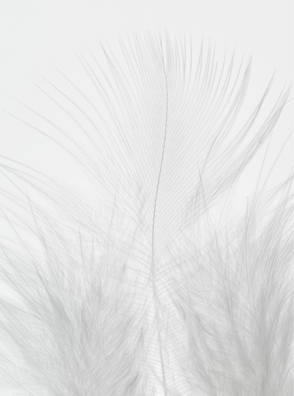 Https Www Opos Fr Opos Management Talent Fabien Sarazin Beauty Esthetique Blanc Fond D Ecran Colore Fond Couleur