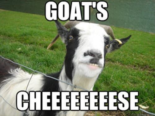 14 Goat Quotes For Every Occasion Goats Goat Quote Goat Pun