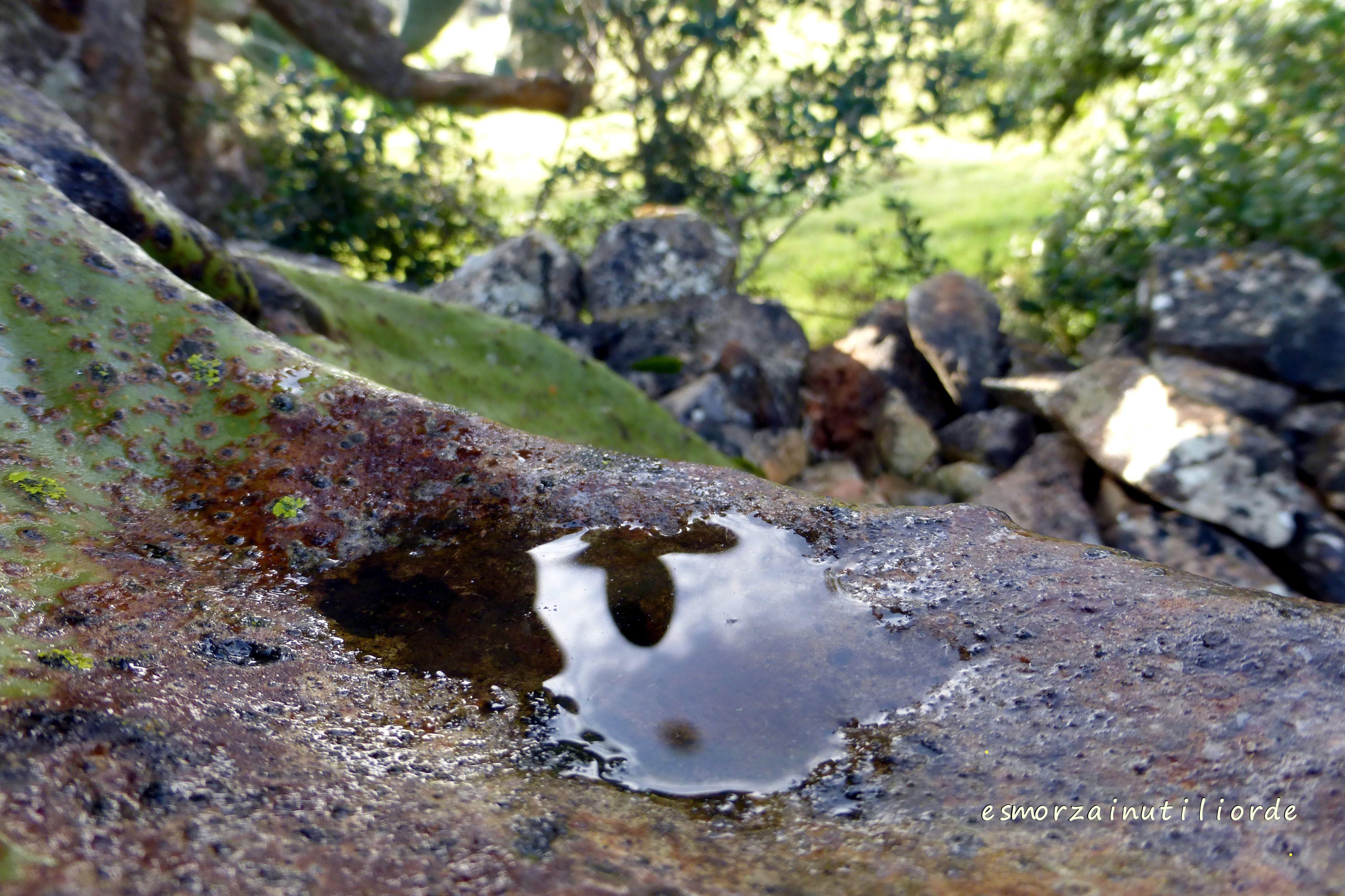 Passeggiando in campagna e riflettendo - giardino, reflections, riflessi, selvatico, verde
