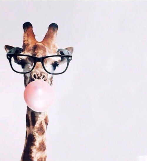 Giraffe Wearing Eyeglasses Amp Blowing A Bubble With Pink