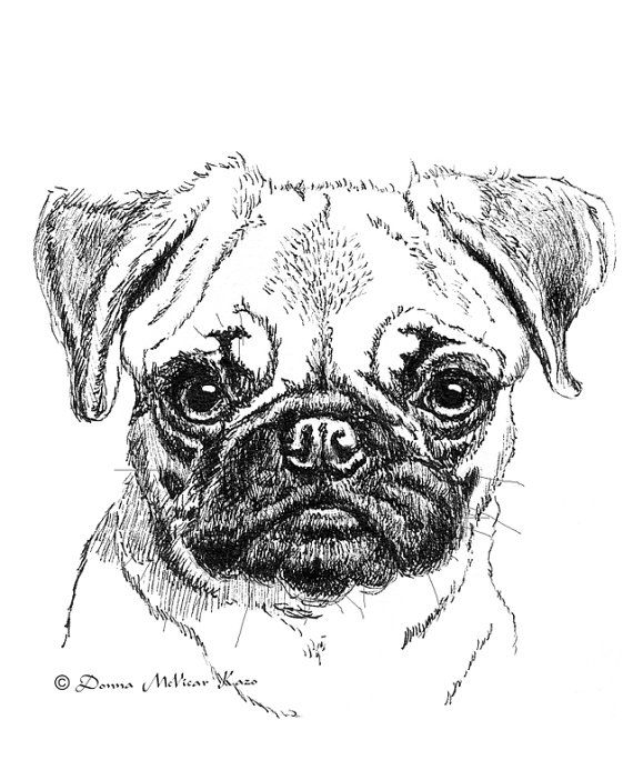 pug puppy ink drawing embellished miniprint by donnakazo on etsy
