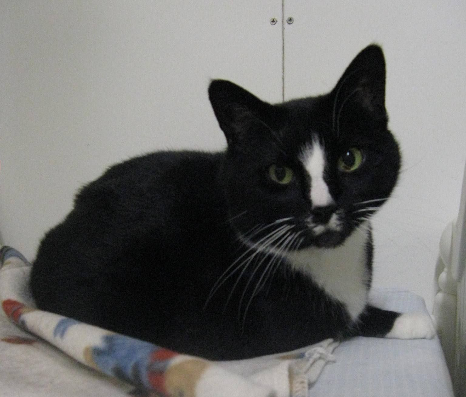 Cat Of The Week 6 23 2013 Cherie Cats Call Her Kitty