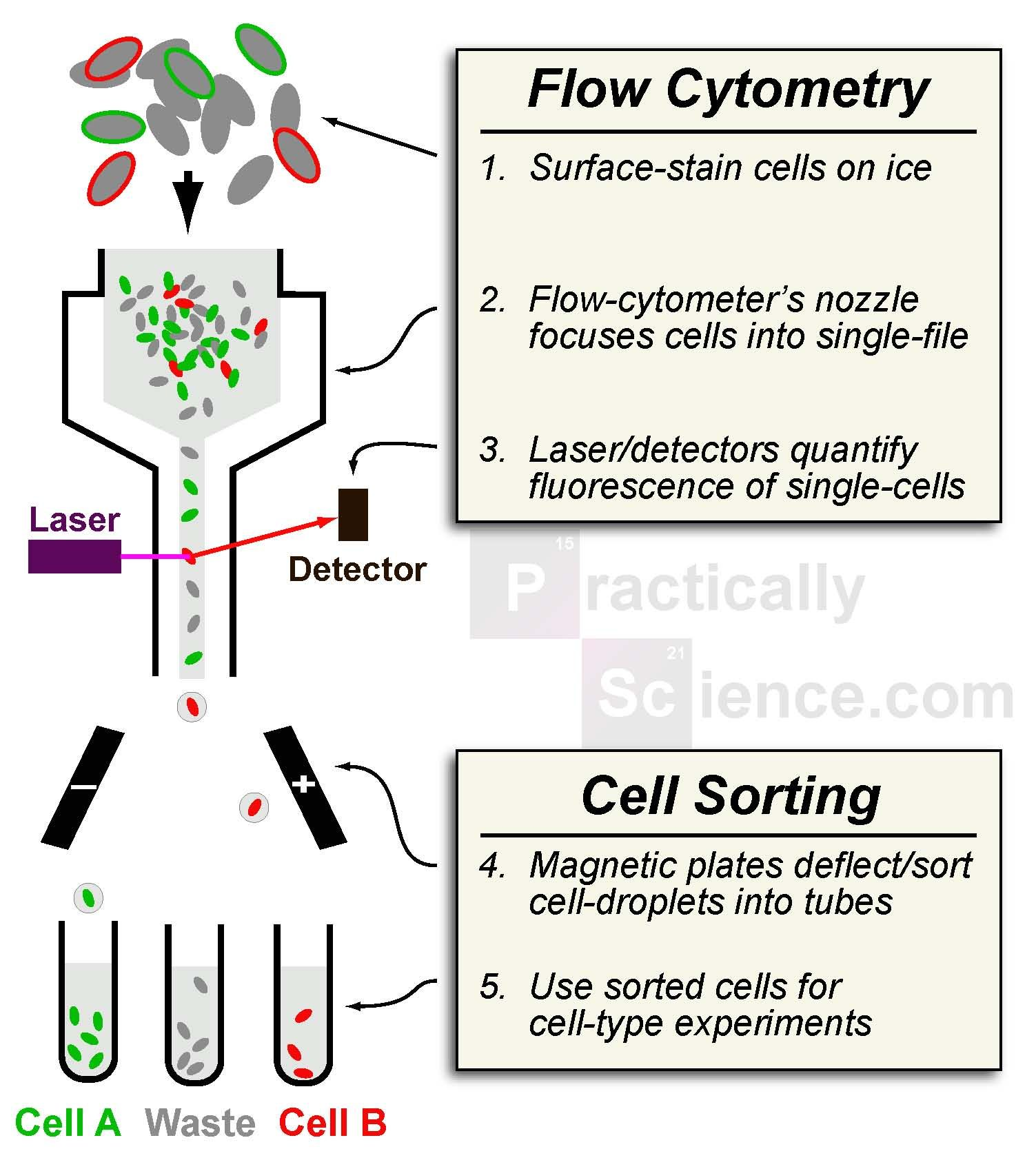 introduction to flow cytometry pdf
